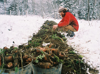 Image result for winter carrots