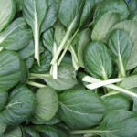Tatsoi (Spinach mustard, Spoon mustard, or Rosette bok choy):